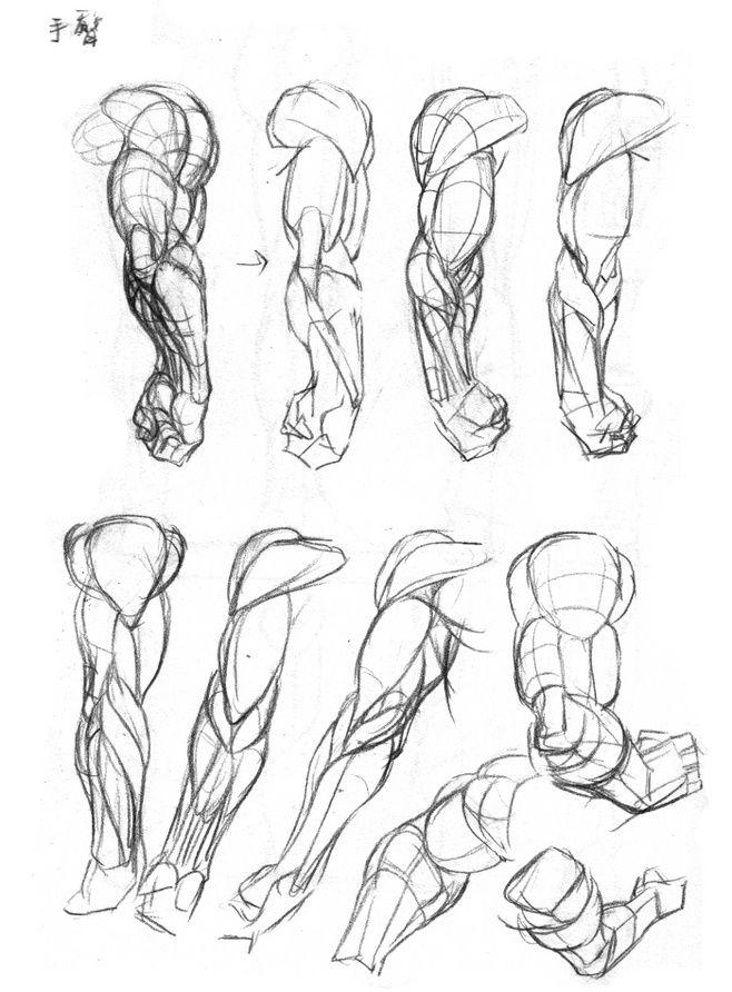 Pin de Sheldon Lloyd en References | Pinterest | Anatomía, Brazos y ...
