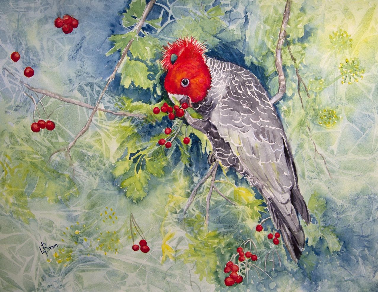 Lorraine Brown Watercolours and more: Gang Gang Cockatoo