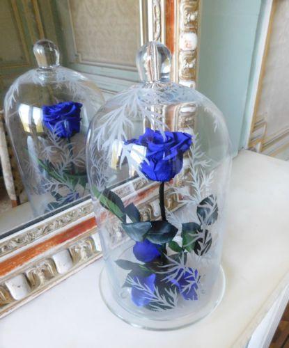 rose la belle et la bete rose bleu naturelle eternelle. Black Bedroom Furniture Sets. Home Design Ideas