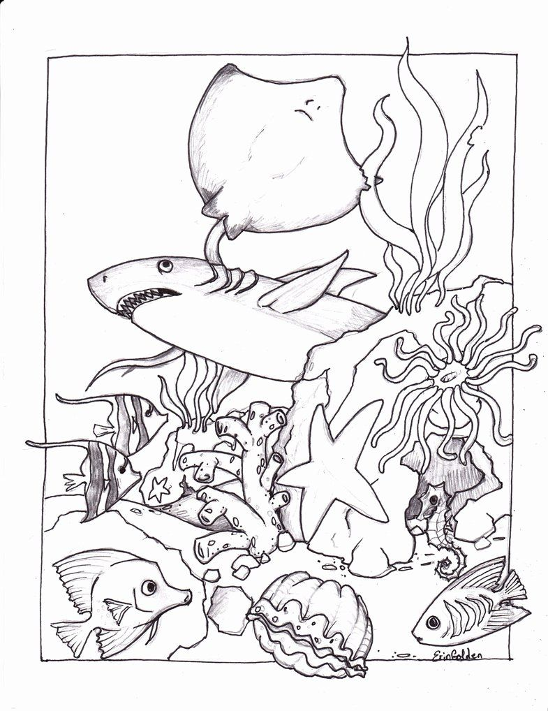 Ocean Animals Coloring Pages Inspirational Free Printable Ocean