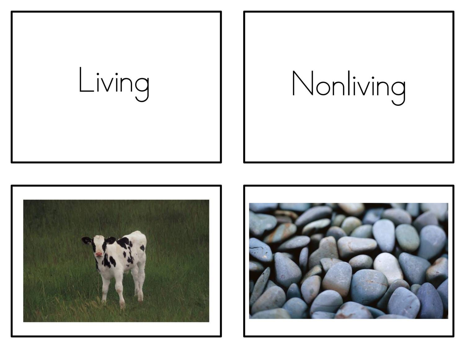 View And Download Living Nonliving Cards On Docdroid
