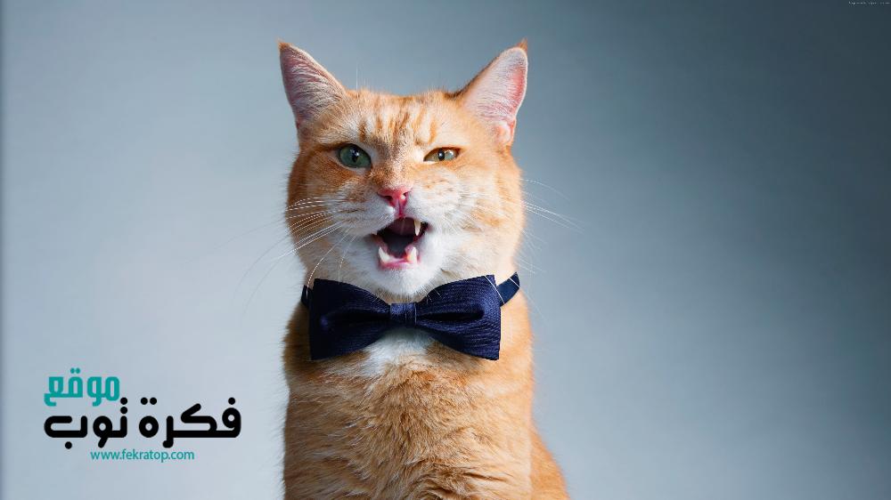 أجمل صور قطط مضحكة 2019 قطط حزينة روعة 4 Funny Animals Animals Funny Cat Faces