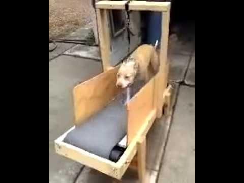 Dogs On Treadmill Homemade Dog Carpet Mill Youtube Dog