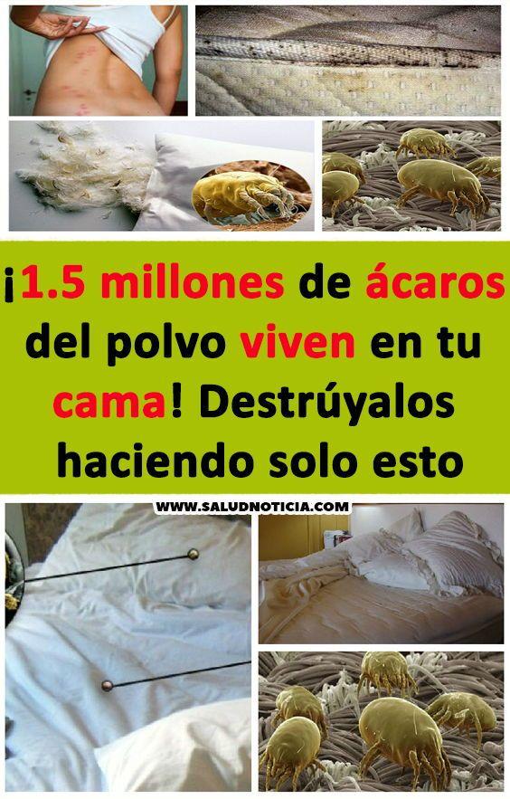 Como Acabar Con Los Acaros De La Cama 1 5 Millones De Acaros Del Polvo Viven En Tu Cama Destruyalos