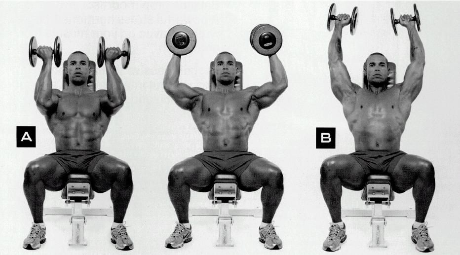 SHOULDERS: lying rear delt flyes, arnold press (pic), DB shrugs, lateral raises, front raises, behind back barbell shrugs, shoulder press, cable rear delt flyes