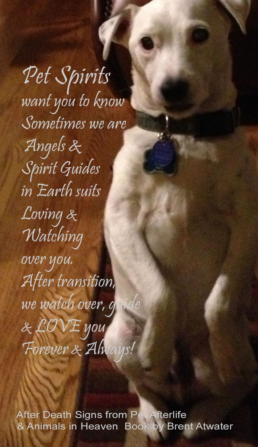 Pin on Dog Loss Quotes, Cat Loss Quotes from Pet Spirits ...