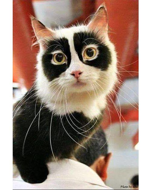 Banana Peel Cat Bed Cute animals, Cute cats, Pretty cats