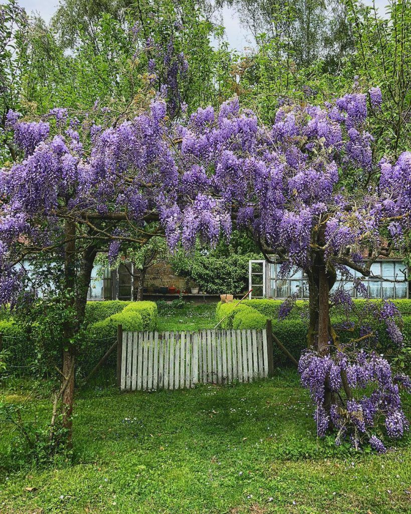 Blooming Arbor Purple Green Garden Arbor Purple Nature Flowers Gorgeous Gardens English Garden Style Garden Arbor