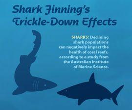 Help Stop Shark Finning Humane Society International Shark Humane Society Stop Animal Cruelty