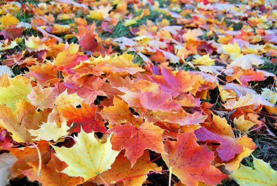 paisajes de otoño para fondo de pantalla - Buscar con Google ...