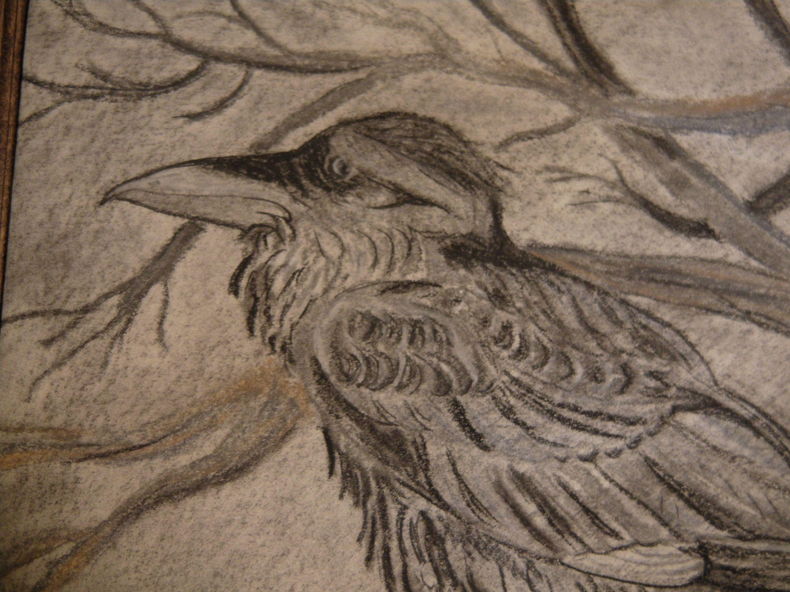 detail Raven charcoal (c) Amanda Turek Ryan