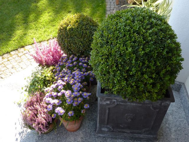 Pin Pa Garden