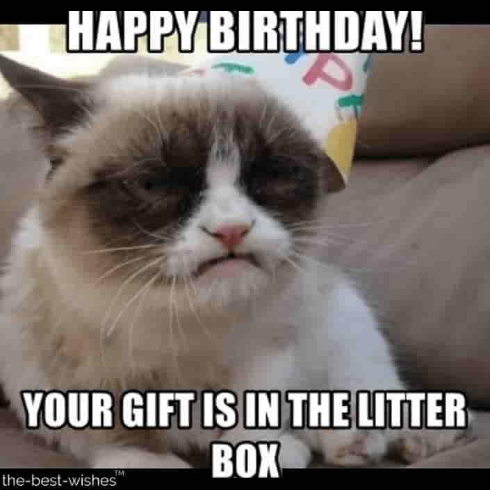 Top 100 Funniest Happy Birthday Memes Most Popular Happy Birthday Cat Grumpy Cat Birthday Grumpy Cat Meme