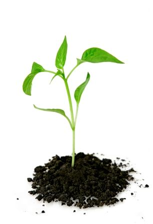 essay on planting trees for a greener living Produced by green plants  a community is a naturally occurring, interactive assemblage of plants and animals living in the same environment  a good example of parasitism is mistletoe growing on a tree.