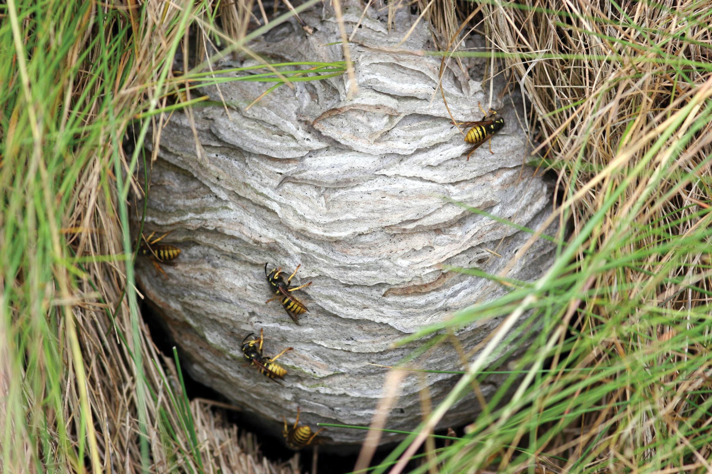 small resolution of stinging insects can build their nests almost anywhere on or around your house prevent these little buggers from infiltrating your personal space by