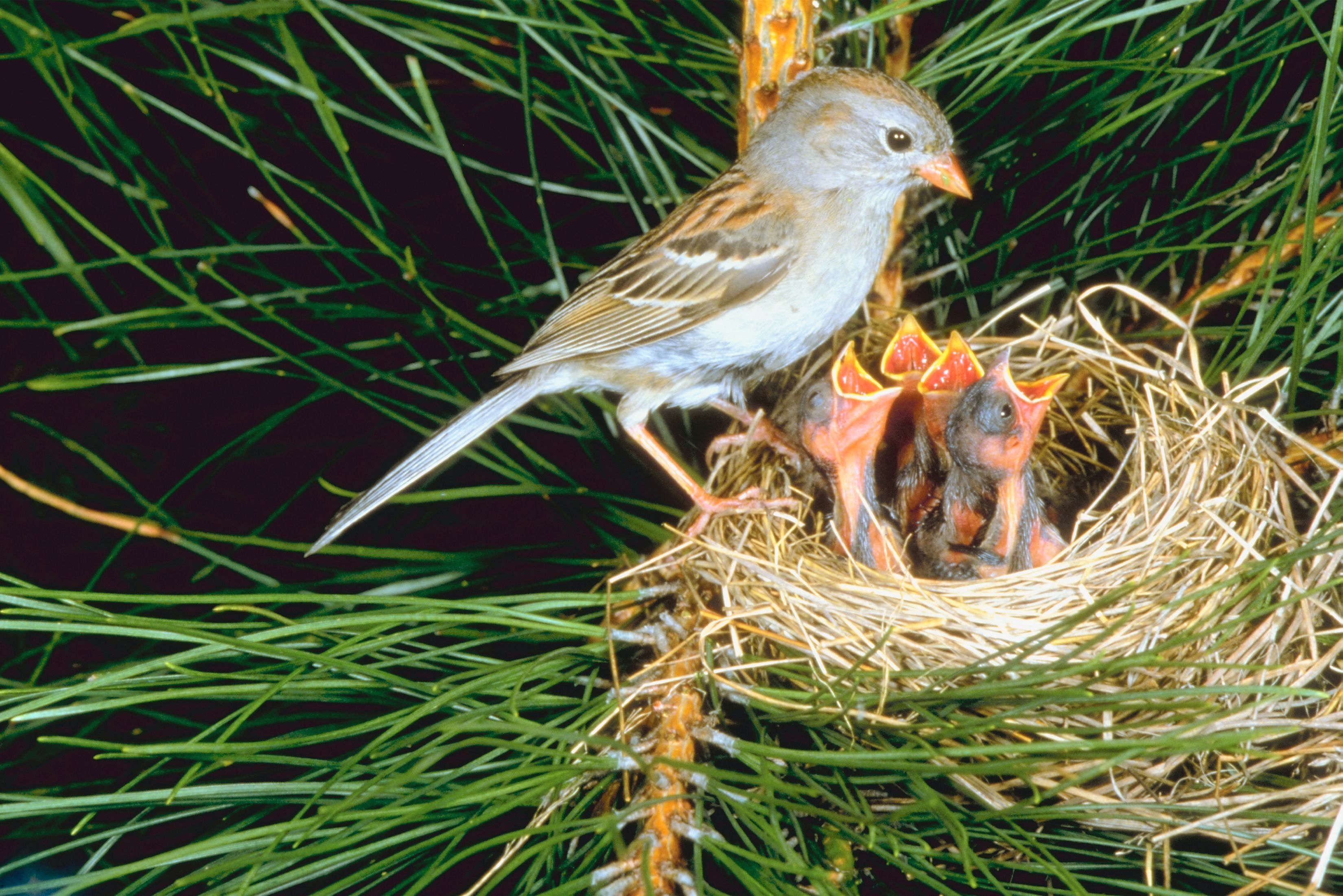 How To Get Rid Of Birds In Your Trees