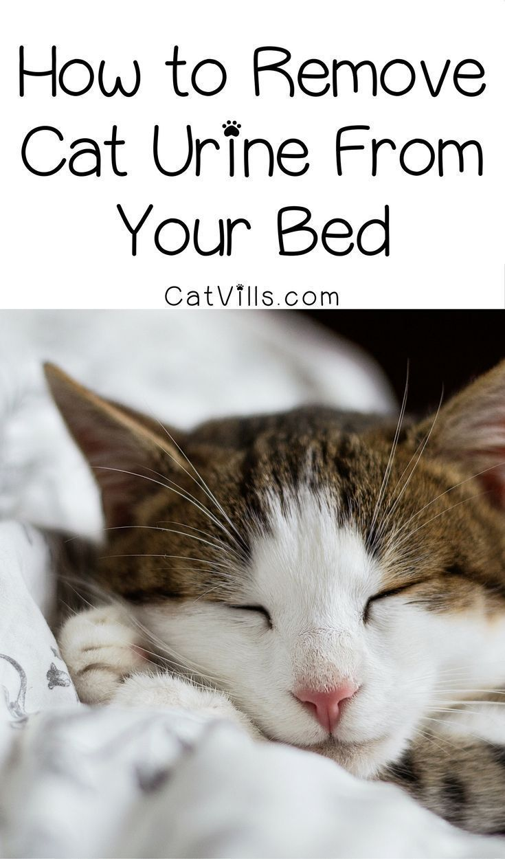 How to Remove Cat Urine from your Bed Cat urine remover