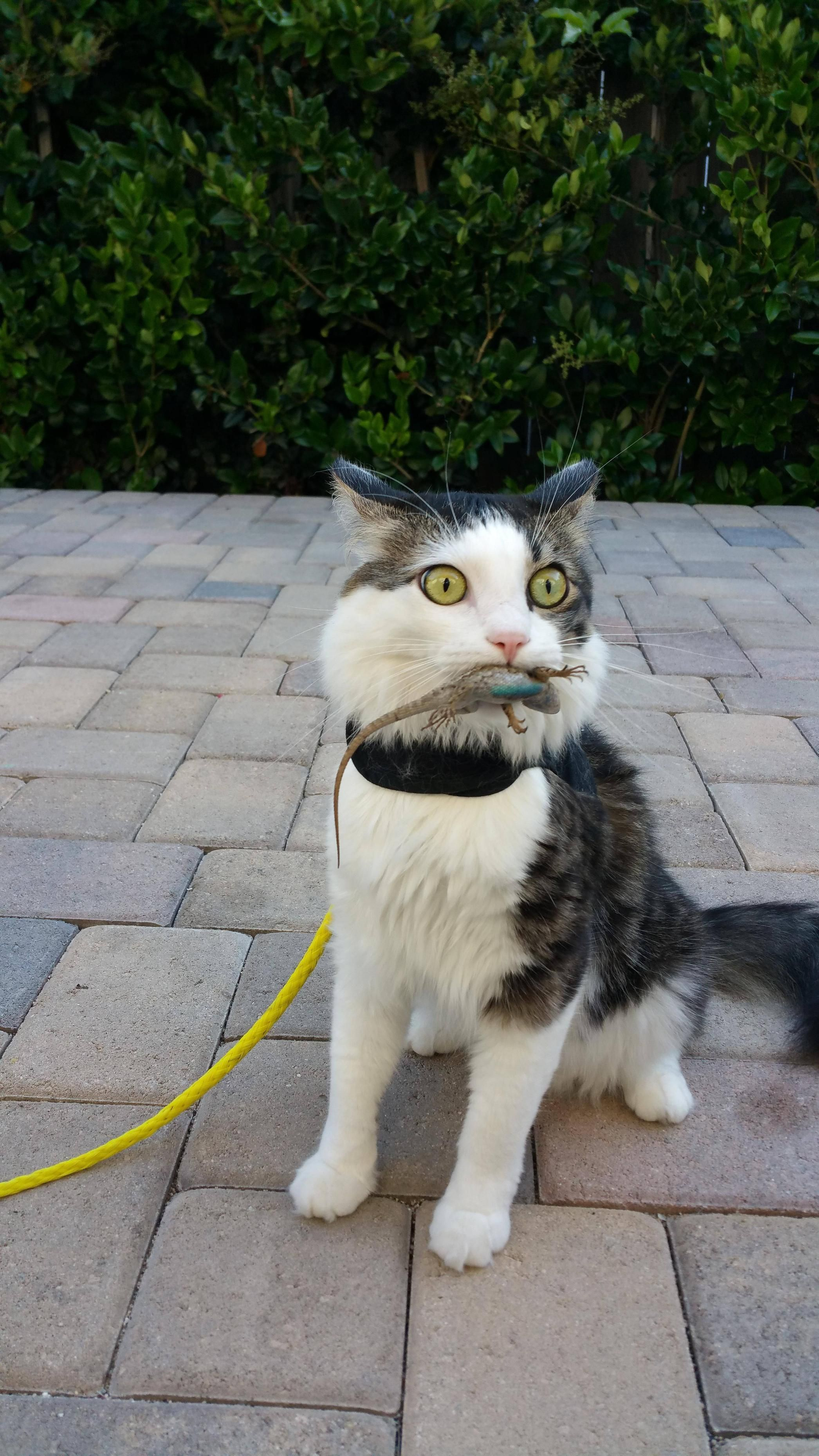 My Cat Caught A Lizard And Had No Idea How To Proceed Cute Funny Animals Funny Animal Pictures Cute Animals