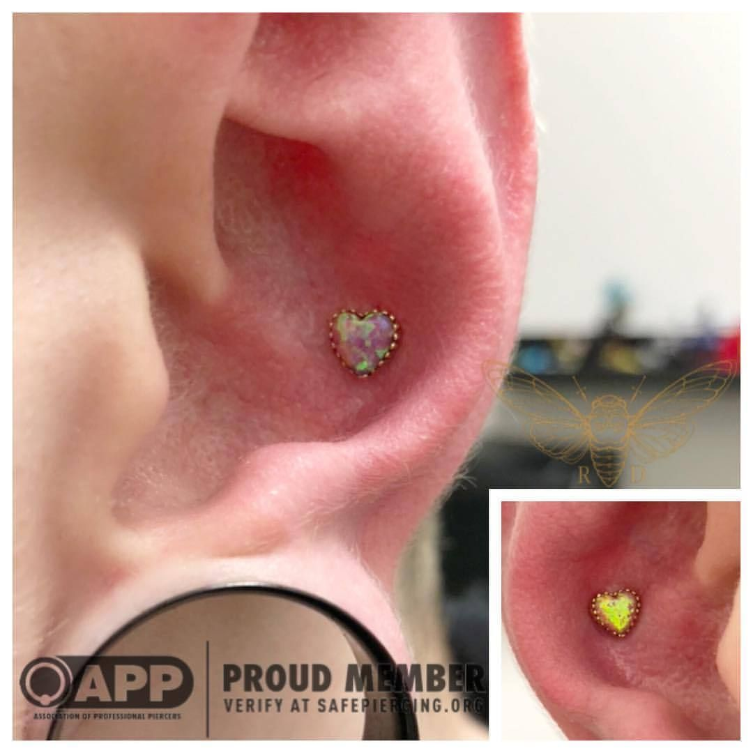 High up nose piercing  Here are some conch piercings I did on our tattoo apprentice