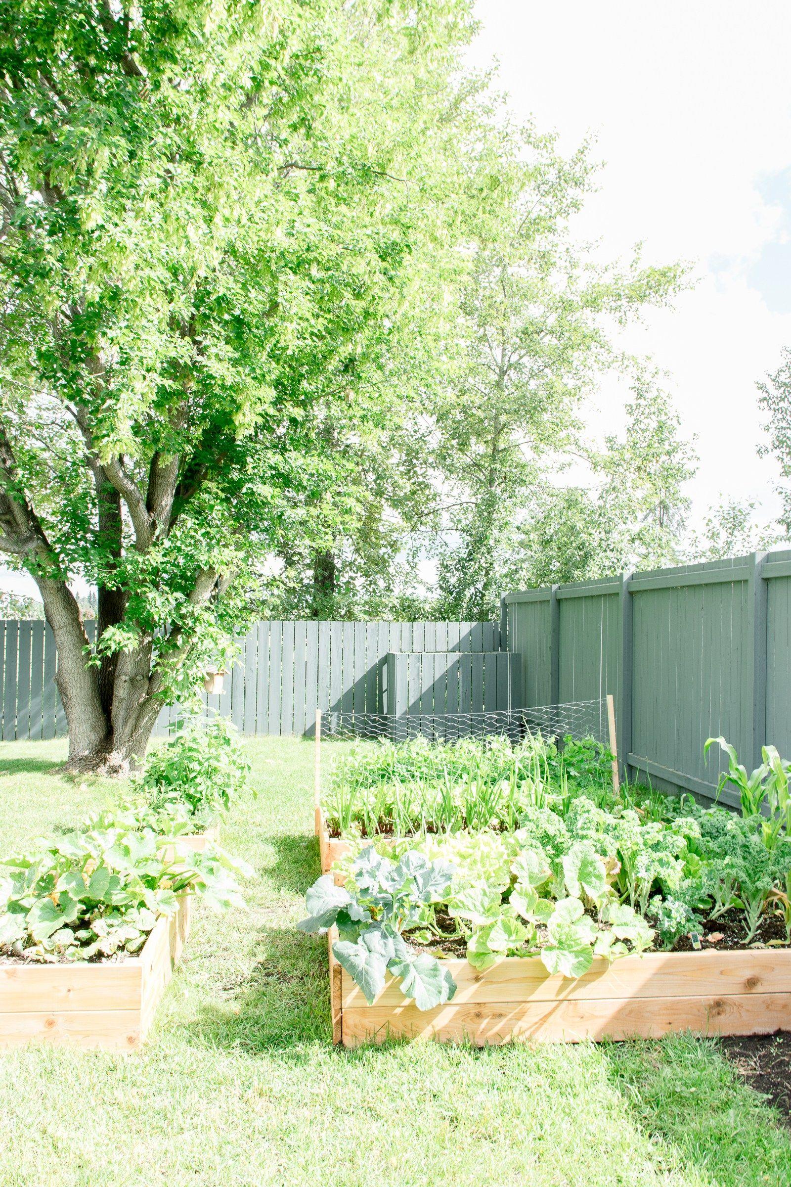 How to build your own diy raised garden bed garden life