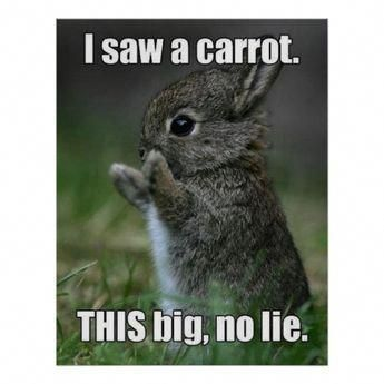 Funny Bunny Poster   Zazzle.com
