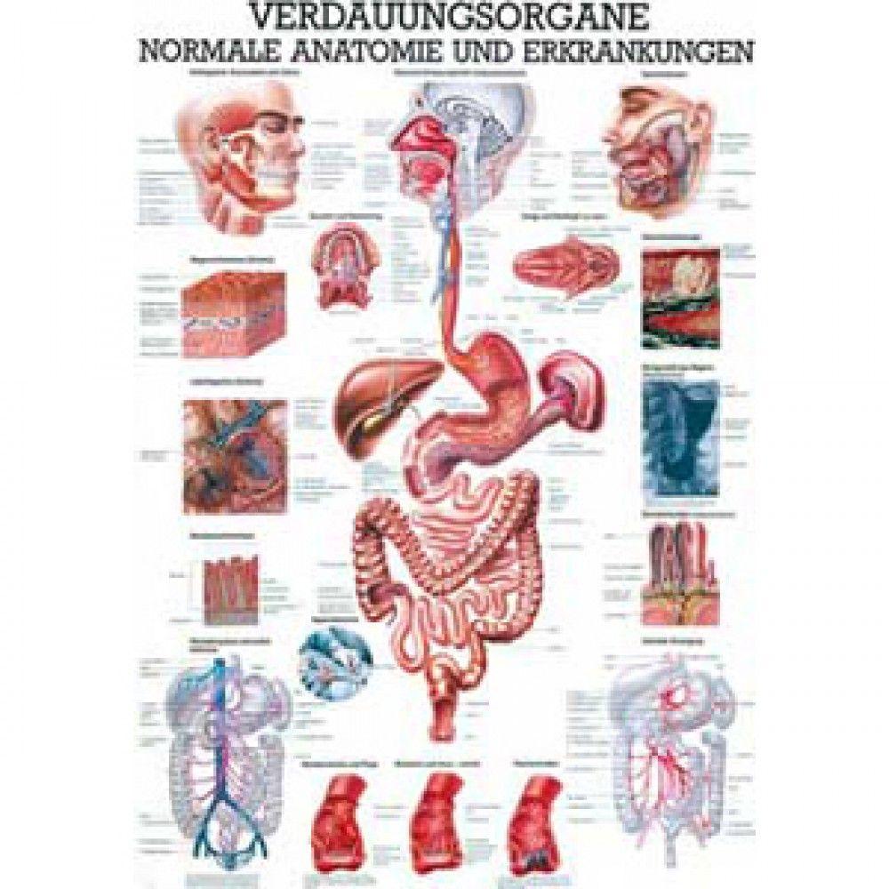 Bildergebnis für proteinverdauung mensch | Ernährungslehre ...