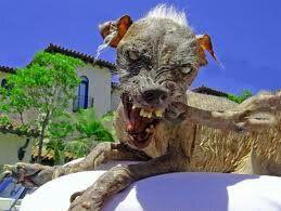 Cão que Mordeu Maradona