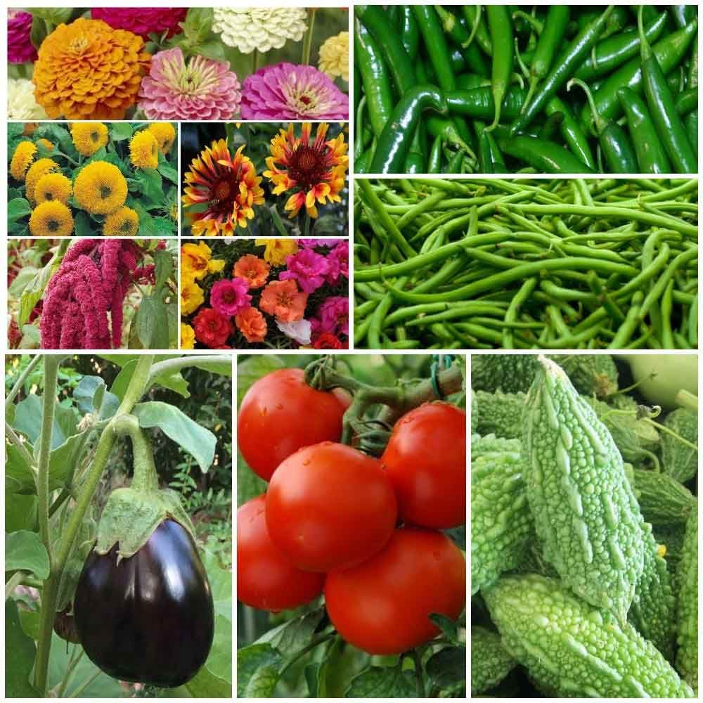 We Are A Leading Company Of Flower Vegetables And Cereal Crops