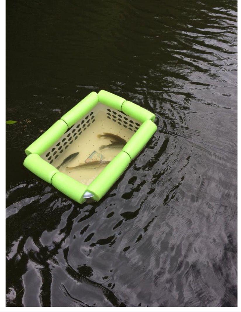 laundry basket, pool noodle....instant fish basket! Great for kayak fishing!