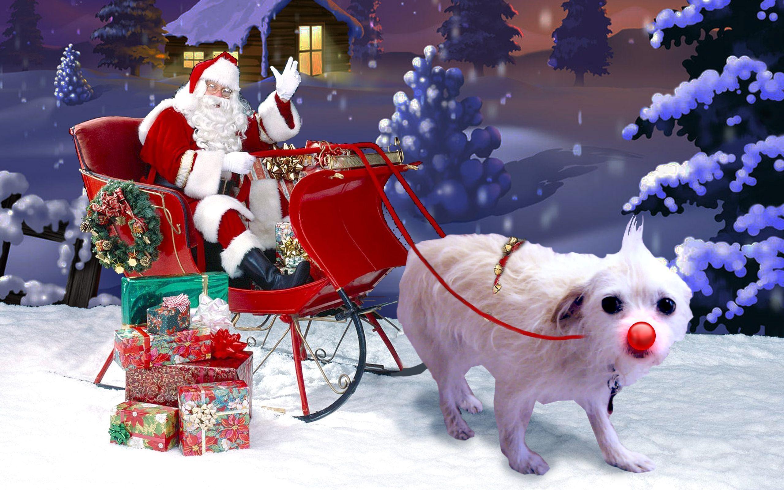 suzie-sleigh 2,560×1,600 pixels | christmas decorations | pinterest