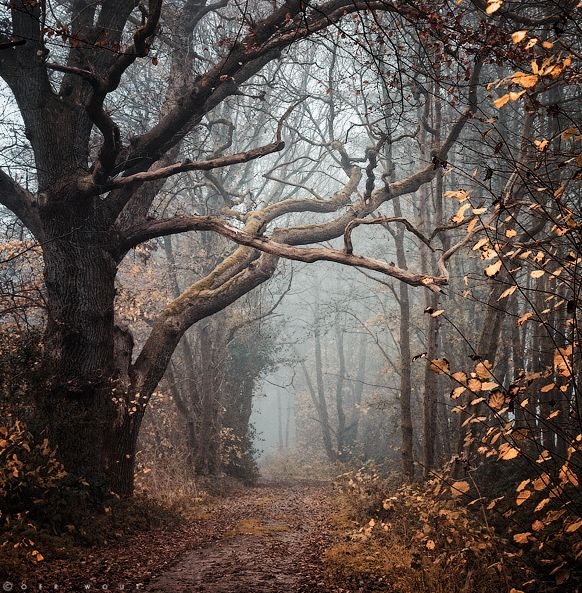 BEAUTIFUL road but watch for Ringwraiths ; )