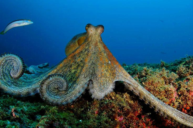 World Oceans Day: Oceana by Carlos Minguel