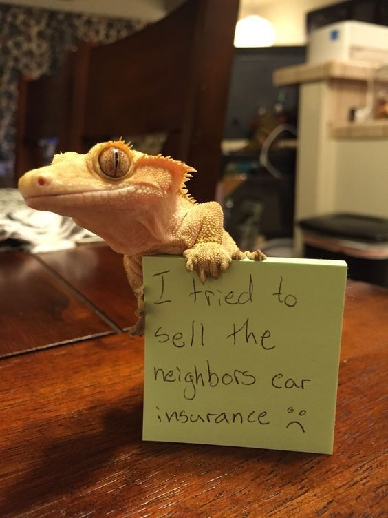 These Cute Reptiles Should Really Be Ashamed Of Themselves