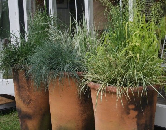ornamental grasses in terracotta plant pots garden