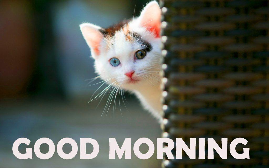 125 Good Morning Images Good Morning Good Morning Pictures Pics Hd Download Good Morning Cat Cute Good Morning Pictures Pretty Cats