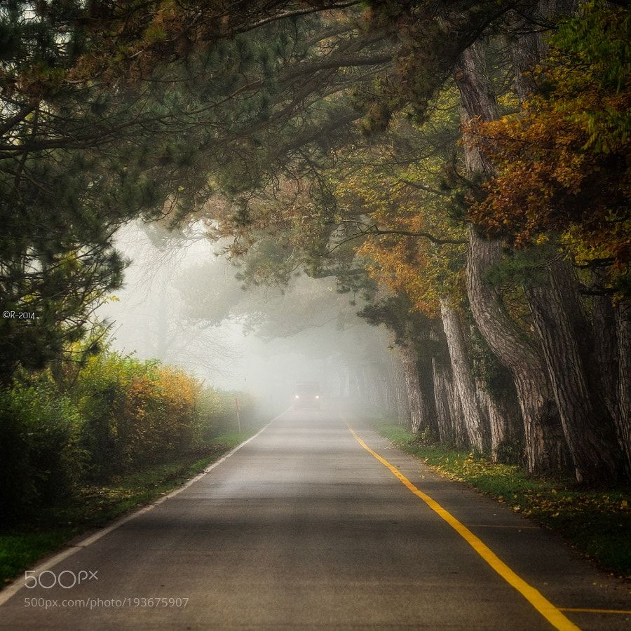 Through the Mist by OlivierRentsch