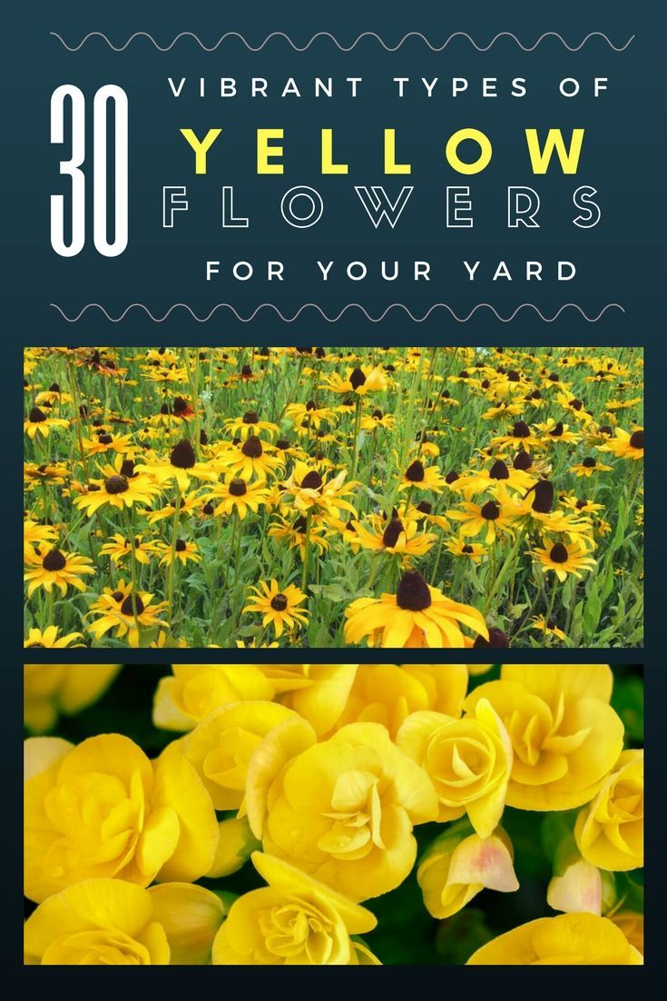 30 Vibrant Types Of Yellow Flowers For Your Yard A To Z Yellow