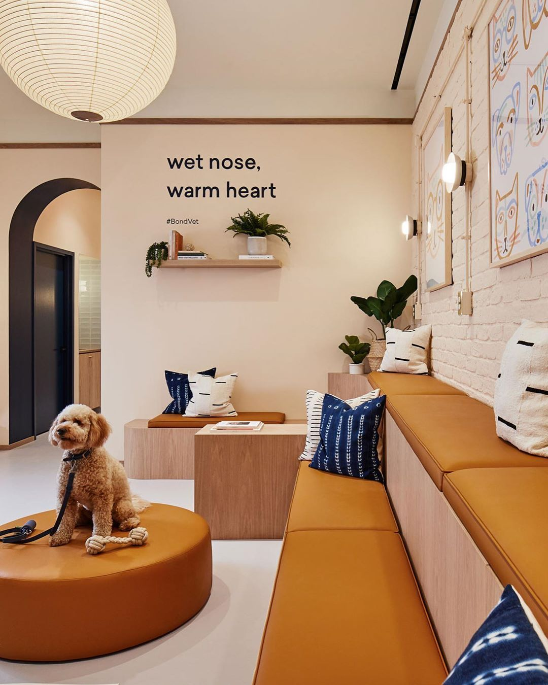 Rich Brilliant Willing On Instagram We Are Excited To Share Brooklyn S First Bondvetclinic Designed By Islynstudio Pet Clinic Vet Clinics Veterinary Clinic