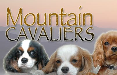 Mountain Cavaliers Near Asheville Nc Cavalier King Charles