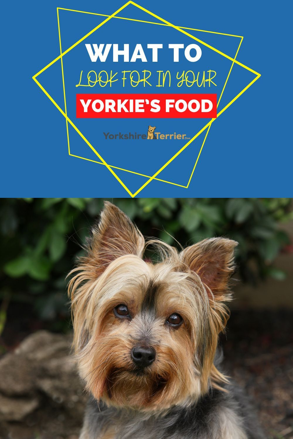 What To Look For In Your Yorkie S Food In 2020 Yorkie Dog Food Recipes Best Dog Food