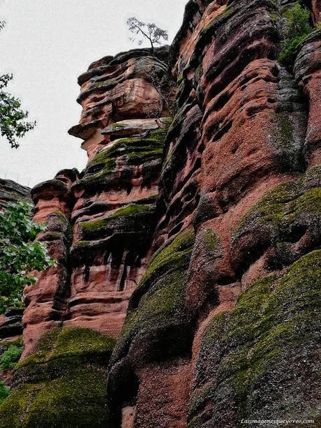 Parque Natural del Alto Tajo. El Barranco de la Hoz del río Gallo, un espectáculo de columnas rojas