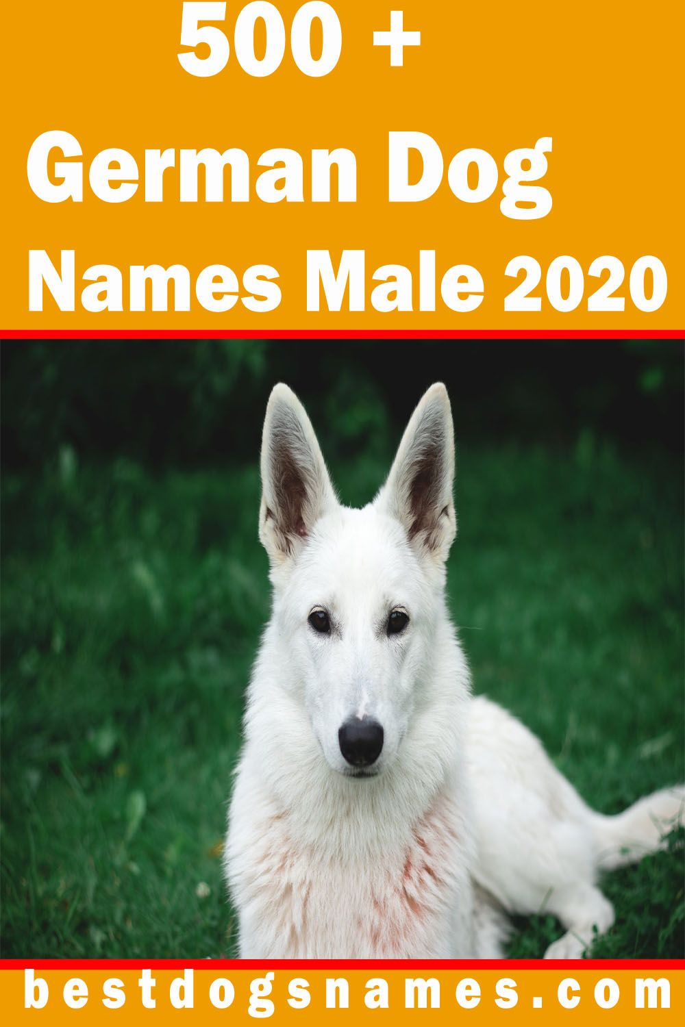 500 Most Popular German Dog Names Unique And Cute German