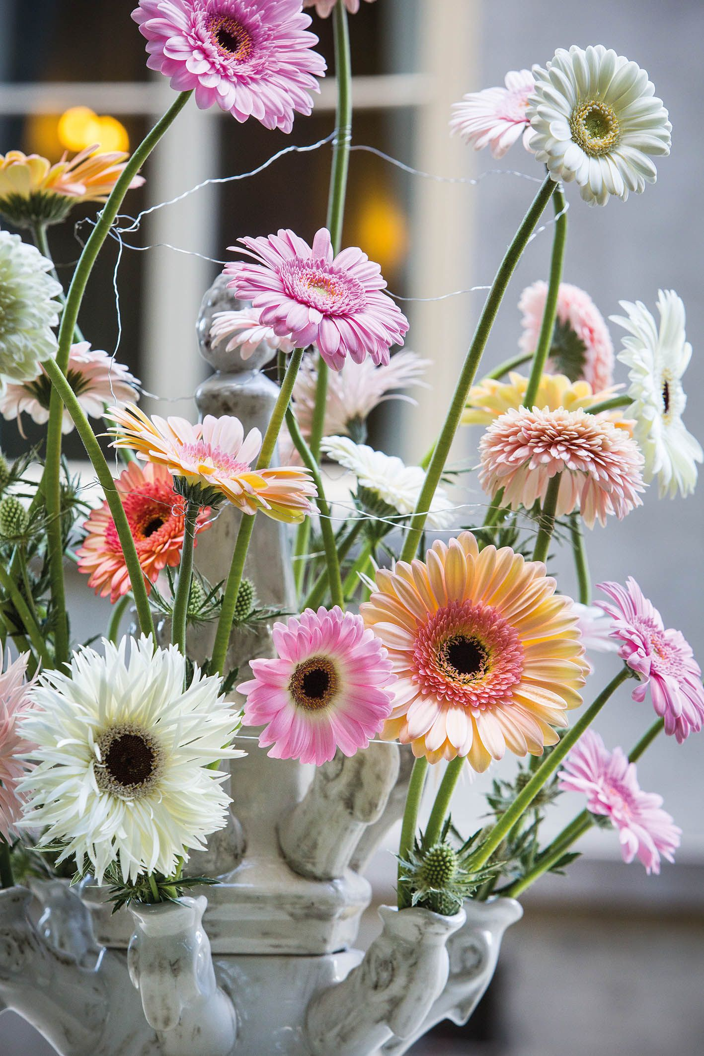 Pin by Veronica Williams on Crazy for Daisy\'s | Pinterest | Gerbera ...