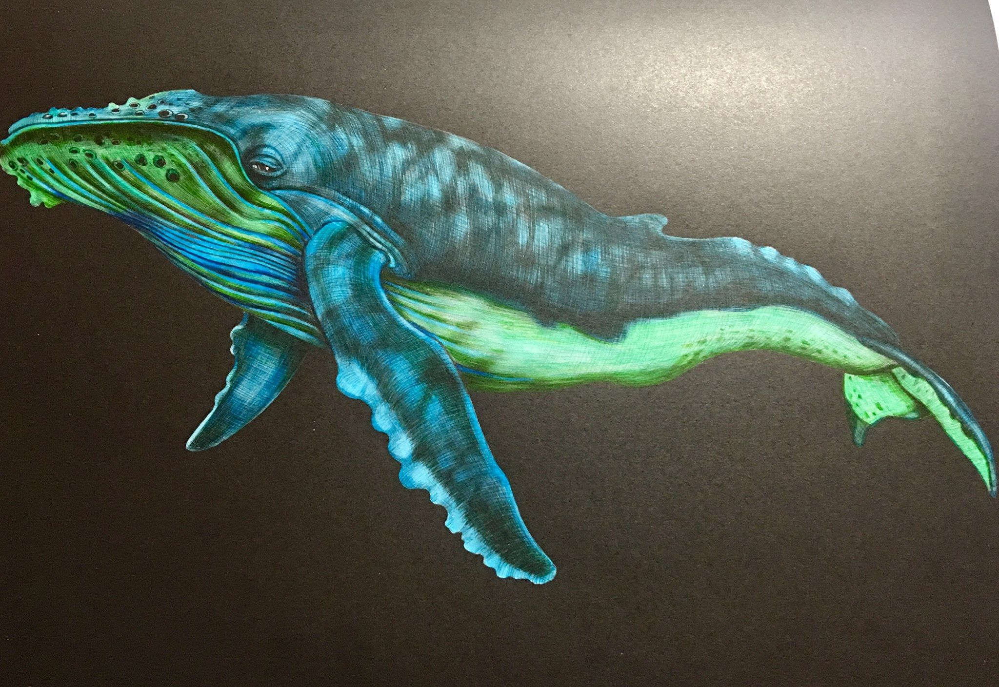 Humpback Whale Coloured By Me And From The Book Intricate Ink Animals In Detail By Tim Jeffs Kleurplaten Inkt