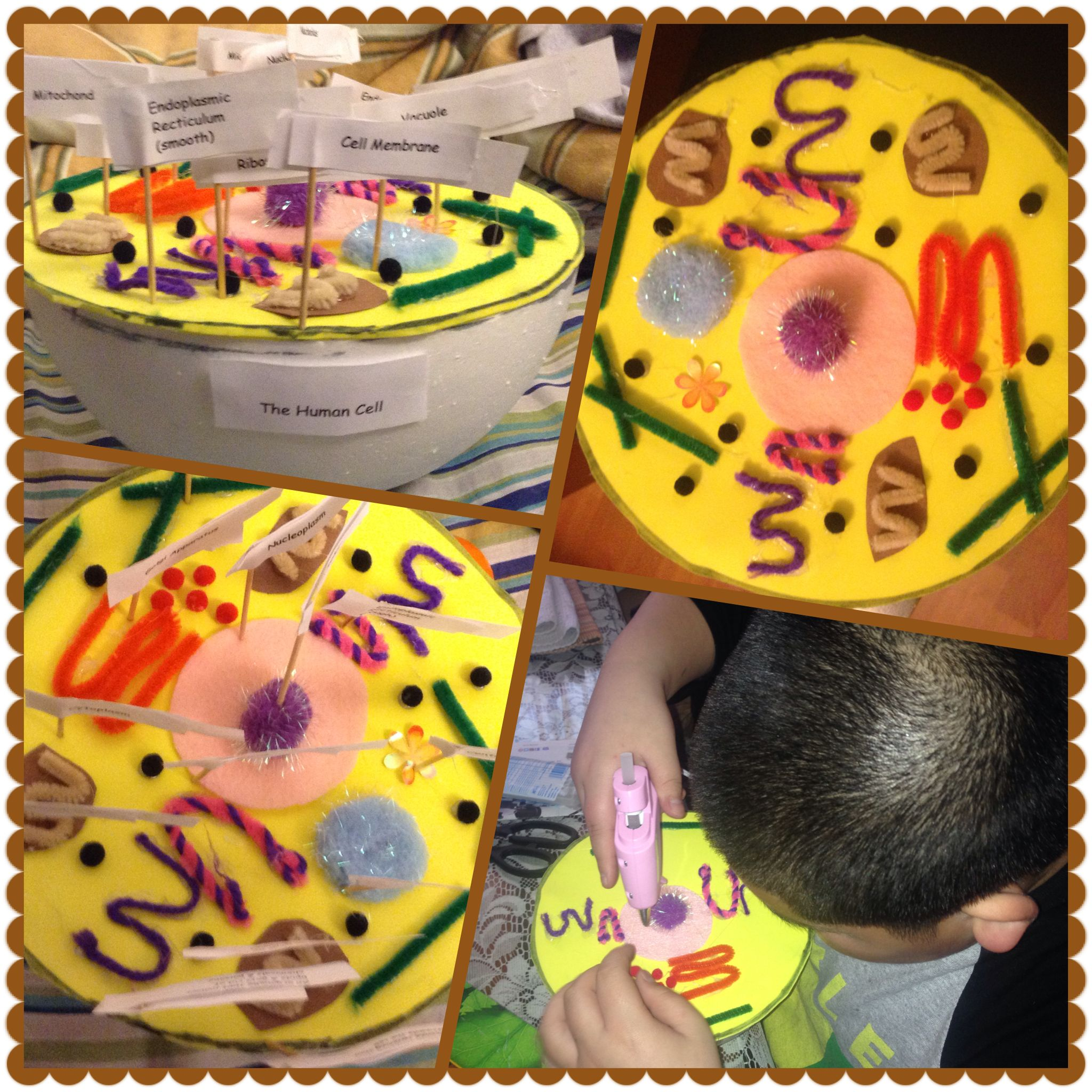 3d Plant Cell Diagram 7th Grade Project Using My Nephews Science Animal