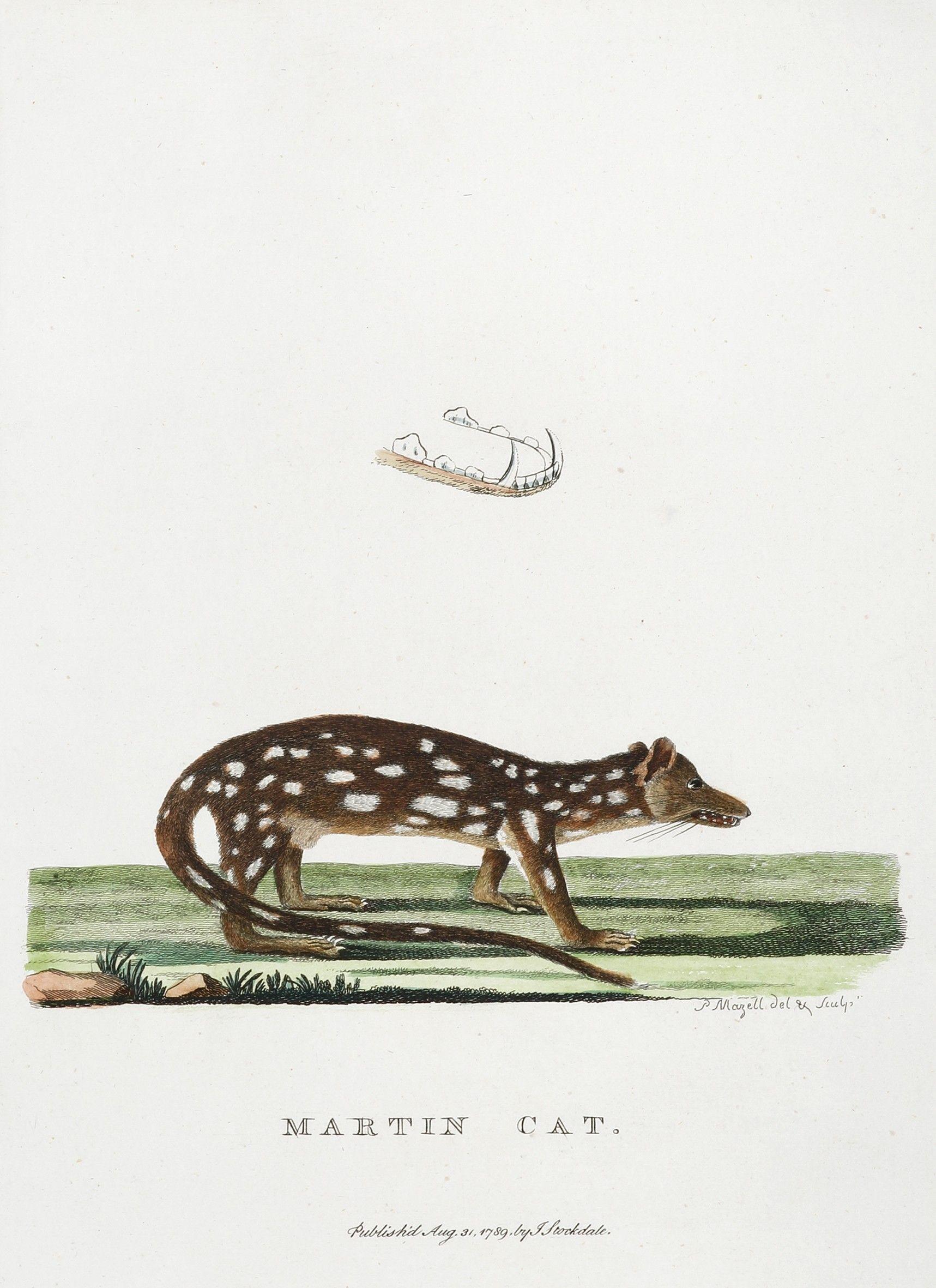 Martin Cat Cats, Australian animals, Botanical illustration