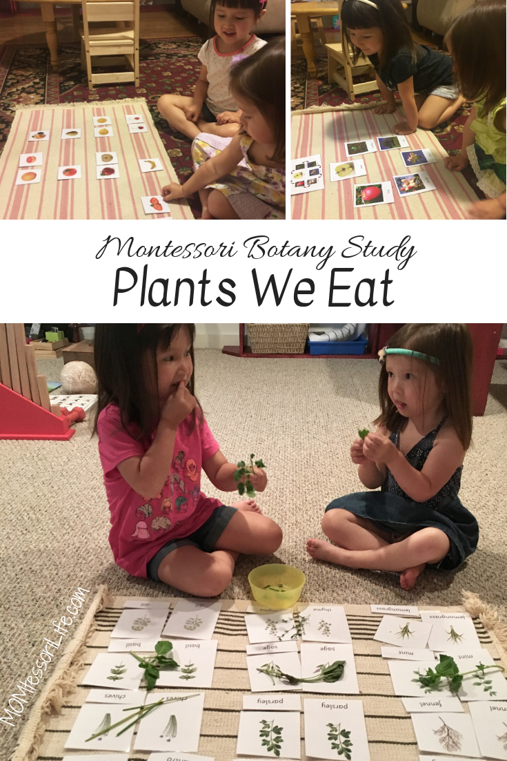Montessori Botany Study Plants We Eat is part of Montessori, Montessori science, Montessori homeschool, Montessori preschool, Montessori education, Montessori activities - After learning about plants in general, trees, leaves, and flowers, we began learning about plants we eat! This part of the study was severely impacted by our move — we started in one house …