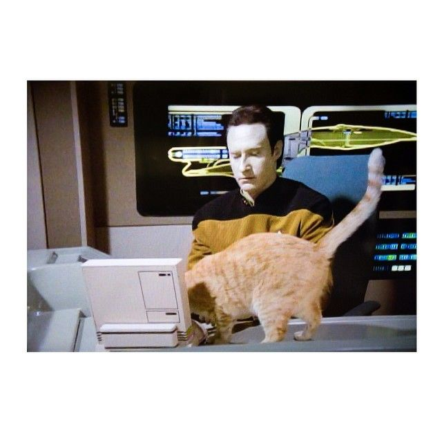 "achabrosdiary:  "" accessing #data 🐈🐾  """