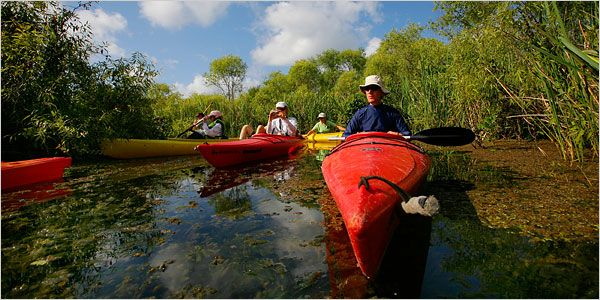 Kayak the Everglades. Because, honestly, I find manatees almost unbearably cute. #JetsetterCurator