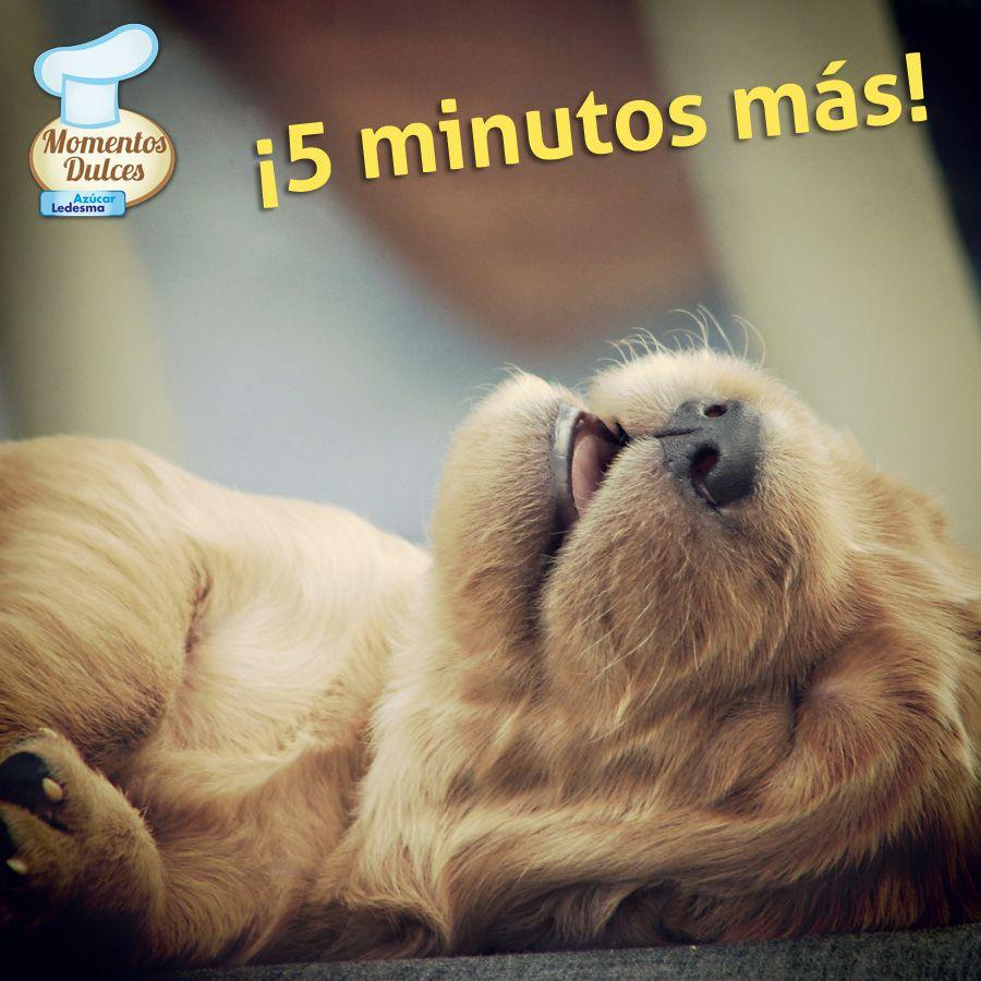 ¡5 minutos más…! ¿Vos también decís esta frase cuando suena el despertador?